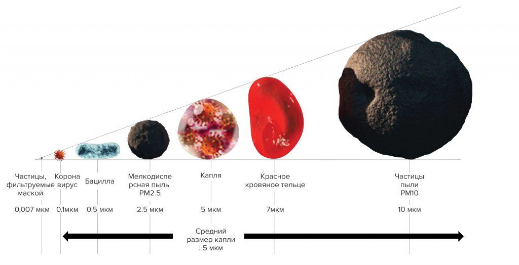 Размеры вирусов и бактерий